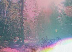 Forest Highland 4