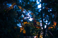 August Afternoons 4